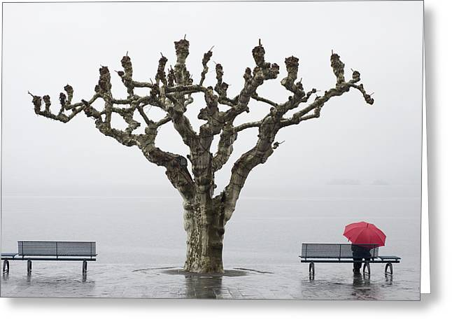 Mid Adult Women Greeting Cards - A Tree And A Person With A Red Umbrella Greeting Card by Mats Silvan