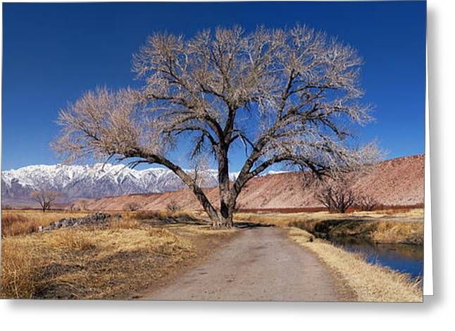 Bishop Hill Greeting Cards - A Tree By The Brook Greeting Card by Alexei Biryukoff