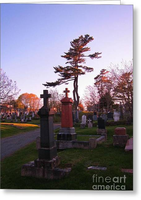 Halifax Photographs Greeting Cards - A Tree Dances There Greeting Card by John Malone