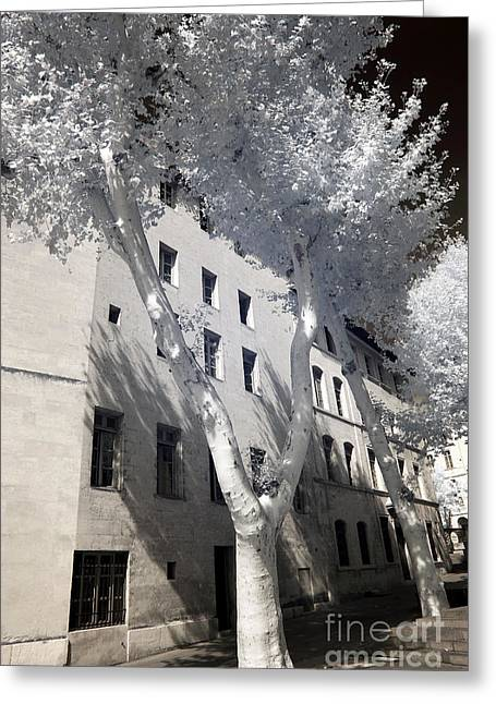 D.w Greeting Cards - A Tree Grows in Marseille Greeting Card by John Rizzuto