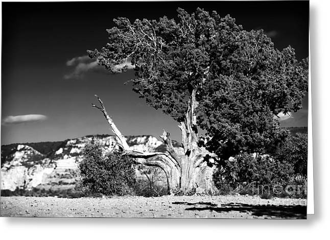 Tree In Rock Greeting Cards - A Tree Grows in Sedona Greeting Card by John Rizzuto