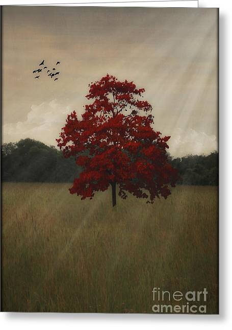 Photos Of Birds Greeting Cards - A Tree In Autumn Greeting Card by Tom York Images