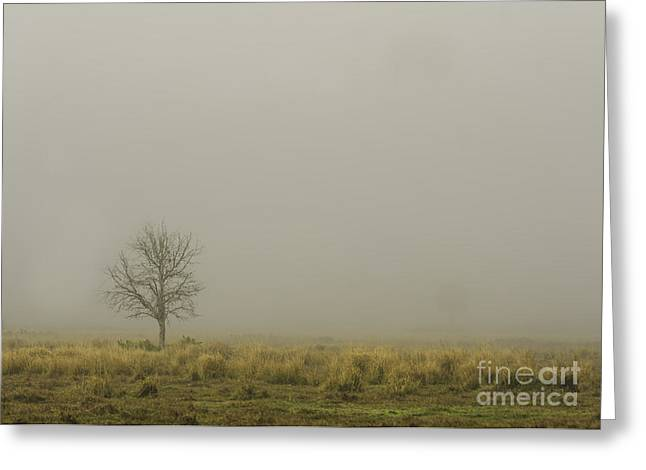 A Tree in Sunrise Fog Greeting Card by Cindy Bryant