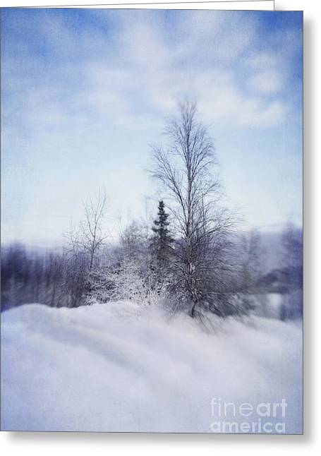 Birch Tree Greeting Cards - A Tree In The Cold Greeting Card by Priska Wettstein