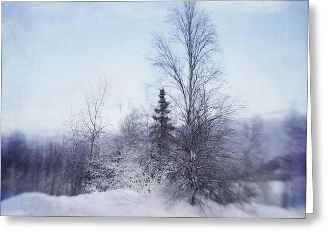 a tree in the cold Greeting Card by Priska Wettstein