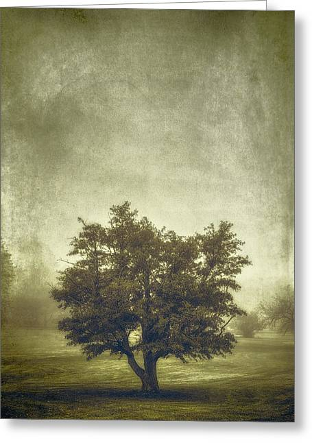 Sepia White Nature Landscapes Greeting Cards - A Tree in the Fog 2 Greeting Card by Scott Norris