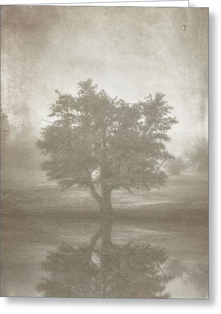 Sepia White Nature Landscapes Greeting Cards - A Tree in the Fog 3 Greeting Card by Scott Norris