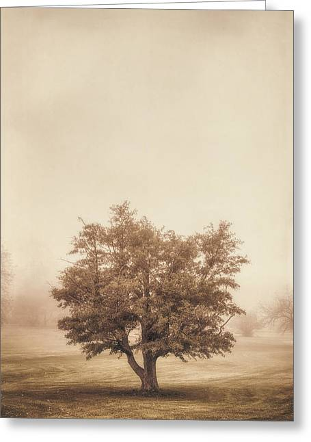 Sepia White Nature Landscapes Greeting Cards - A Tree in the Fog Greeting Card by Scott Norris