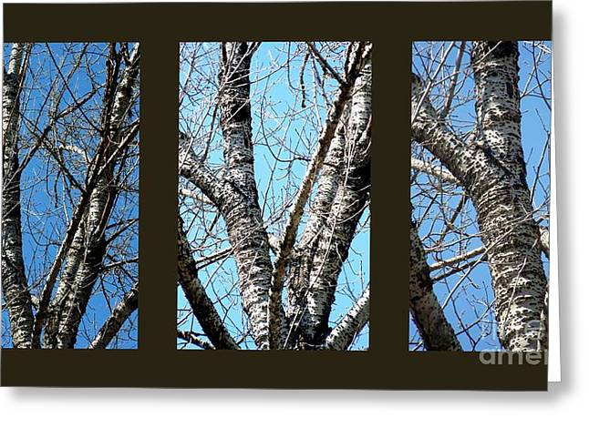 Elm Digital Art Greeting Cards - A Tree In Threes Greeting Card by Eunice Miller