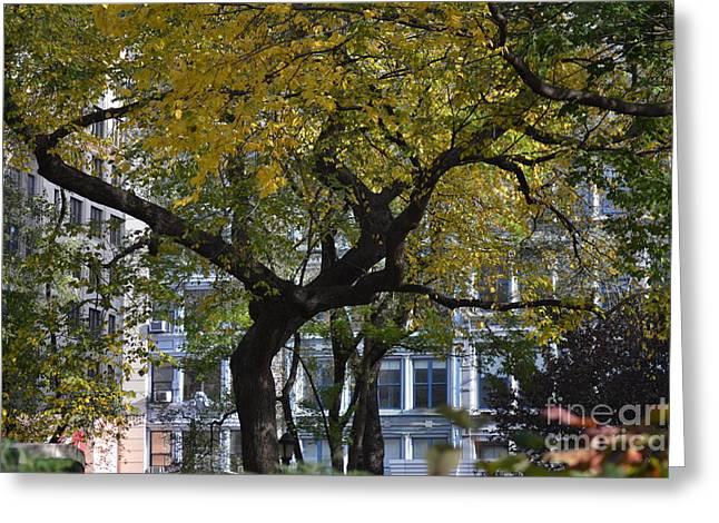 Robert Daniels Photographs Greeting Cards - A Tree On Fifth Avenue Greeting Card by Robert Daniels