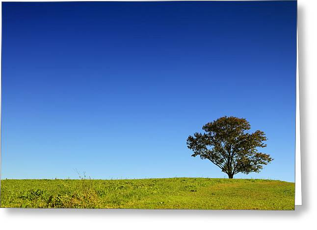 Farm Stand Greeting Cards - A Tree Stands Alone Greeting Card by Karol  Livote