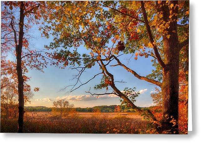 Concord Greeting Cards - A Trees View of Autumn on the Marsh Greeting Card by Sylvia J Zarco