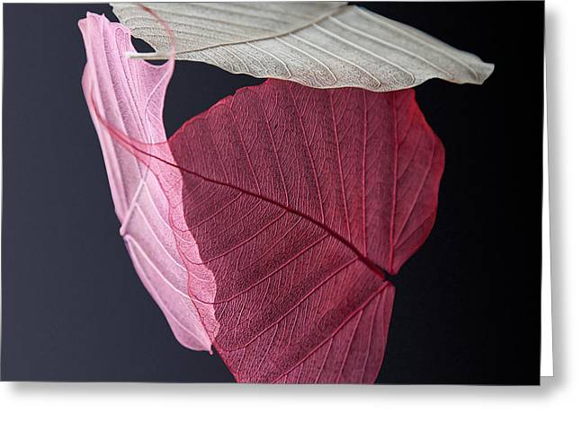 A Trinity Of Leaves Greeting Card by Maggie Terlecki
