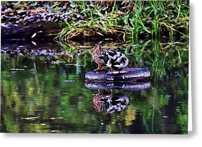 Steering Greeting Cards - A trip with the car si - two mallard on a trip on a tyre  Greeting Card by Leif Sohlman