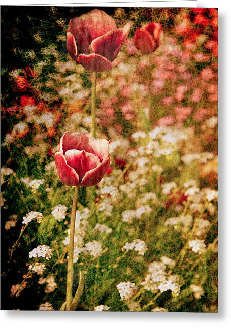 Loriental Greeting Cards - A Tulips Daydream Greeting Card by Loriental Photography