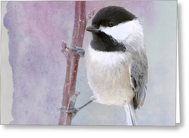 Twinkle Greeting Cards - A Twinkle in My Eye Greeting Card by Betty LaRue