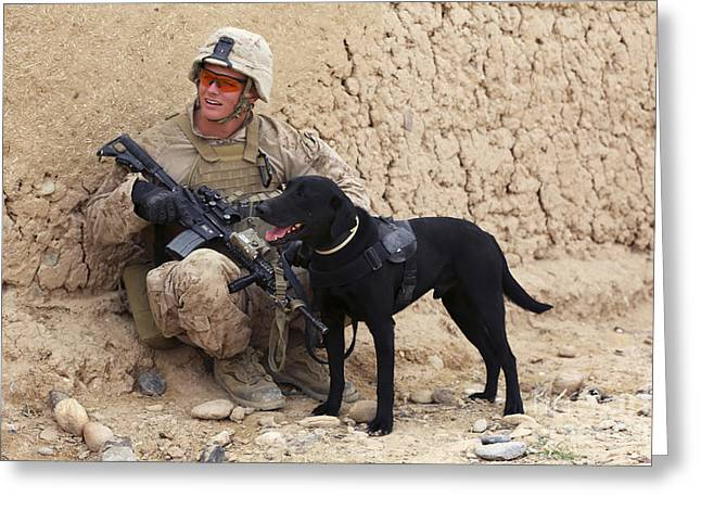 Working Dog Greeting Cards - A U.s. Marine Dog Handler And His Dog Greeting Card by Stocktrek Images