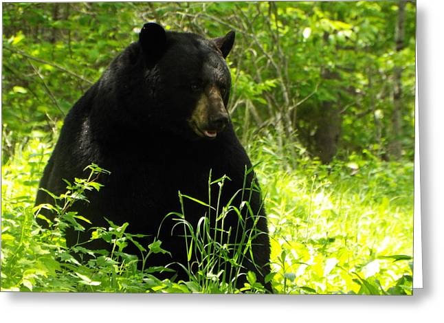 Amimal Greeting Cards - A Very Majestic Bear Greeting Card by Cheryl King