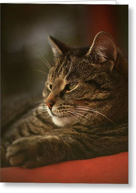 Photo Of Cat Greeting Cards - A Very Relaxed Cat Called Mosey Greeting Card by Anne Macdonald