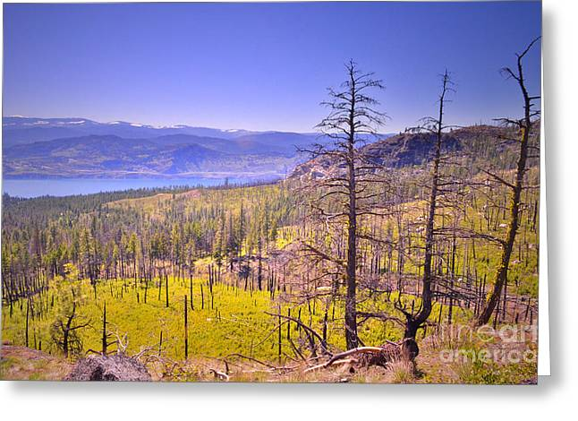 Park Scene Greeting Cards - A View from Okanagan Mountain Greeting Card by Tara Turner