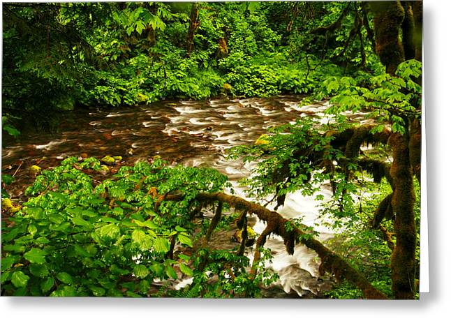 A View Of Eagle Creek Greeting Card by Jeff Swan