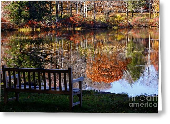 Marcia Lee Jones Greeting Cards - A View of Wonder Greeting Card by Marcia Lee Jones
