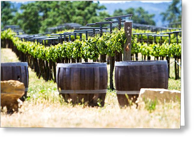 Vines Greeting Cards - A vineyard with oak barrels Greeting Card by Susan  Schmitz