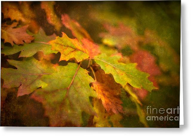 Aging Process Greeting Cards - A Vision of Fall Greeting Card by Venetta Archer