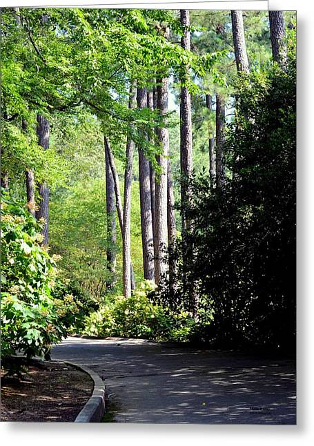 Maria Urso Greeting Cards - A Walk in the Shade Greeting Card by Maria Urso