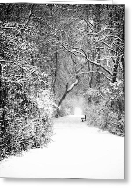 Babylon Greeting Cards - A Walk in the Winter Woods Greeting Card by Vicki Jauron