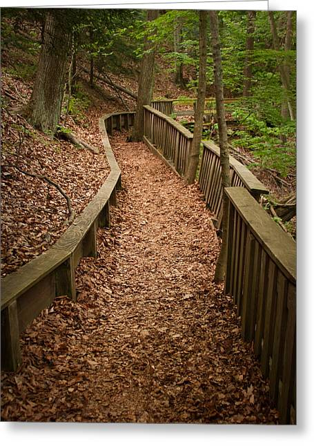 Pure Michigan Greeting Cards - A Walk in the Woods Greeting Card by Adam Romanowicz