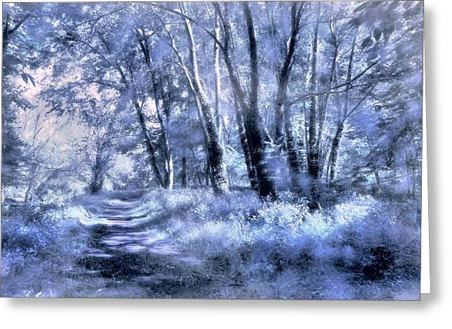 Print Photographs Greeting Cards - A Walk in Winter Greeting Card by John Rivera