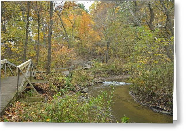 Cim Paddock Greeting Cards - A walk next to the creek Greeting Card by Cim Paddock