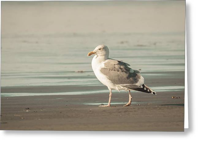 Taking Photographs Greeting Cards - A Walk on the Beach Greeting Card by Lucid Mood