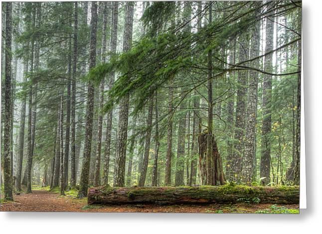 Jean Noren Greeting Cards - A Walk Through the Forest Greeting Card by Jean Noren