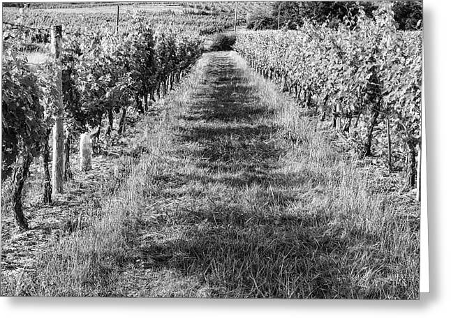South West France Greeting Cards - A Walk Through the Vineyard Greeting Card by Nomad Art And  Design