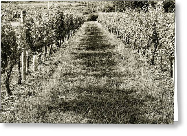 South West France Greeting Cards - A Walk Through the Vineyard Toned Greeting Card by Nomad Art And  Design