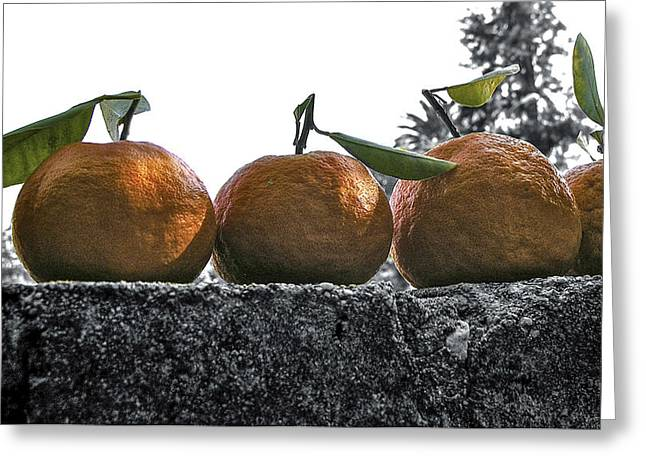 Gleaning Greeting Cards - A wall of tangerines 1 Greeting Card by Rebecca Dru