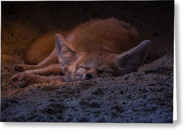 Animals Sleeping Greeting Cards - A warming glow Greeting Card by Chris Fletcher