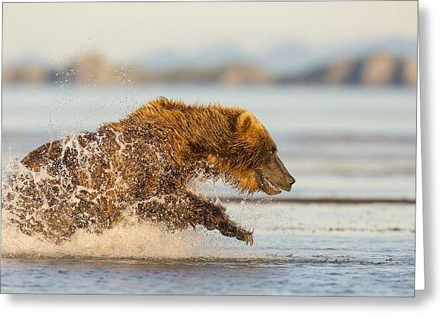 Born Adult Greeting Cards - A Wet and Wild Chase Greeting Card by Tim Grams