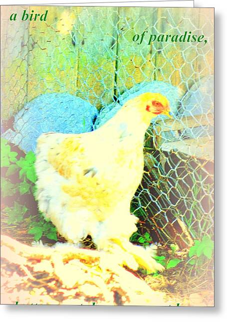 Sweating Photographs Greeting Cards - A Wet Hen  Greeting Card by Hilde Widerberg