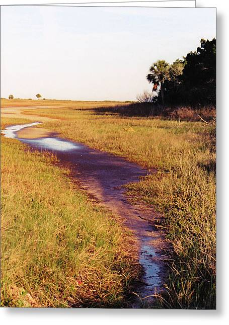 Wildlife Refuge. Greeting Cards - A Wet Trail To The Ocean Greeting Card by Jan Amiss Photography