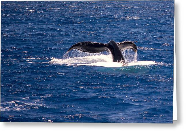 Whale Tail Greeting Cards - A Whale of a Tail Greeting Card by Camille Lopez