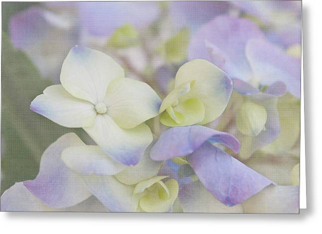 Purple Hydrangeas Greeting Cards - A Whisper Greeting Card by Kim Hojnacki