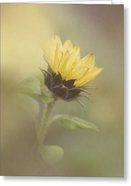 Enhanced Greeting Cards - A Whisper of a Sunflower Greeting Card by Angie Vogel
