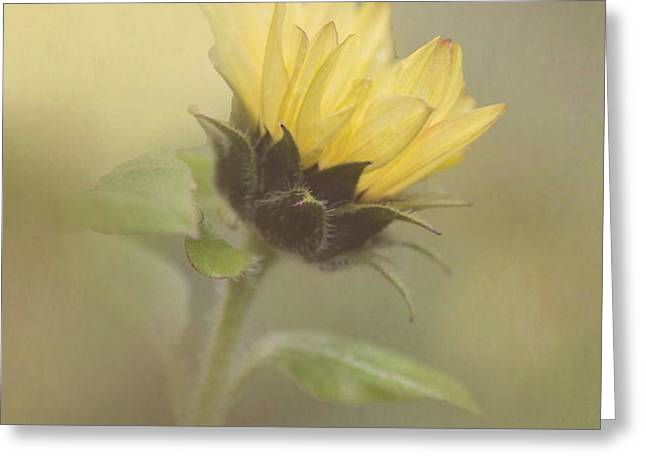 A Whisper of a Sunflower Greeting Card by Angie Vogel