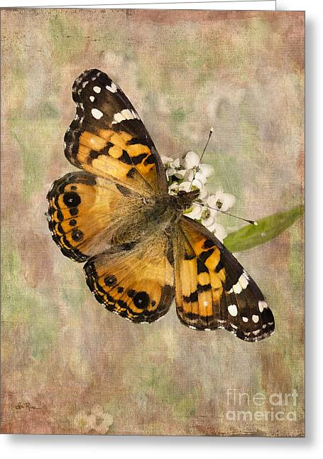 Painted Lady Butterflies Greeting Cards - A Whisper of Wings Greeting Card by Betty LaRue