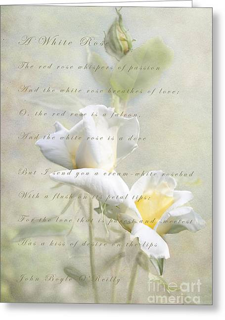 Lindalees Greeting Cards - A White Rose Greeting Card by Linda Lees