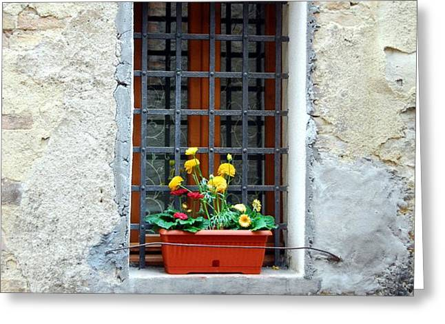 A Window In Tuscany Greeting Card by Mel Steinhauer