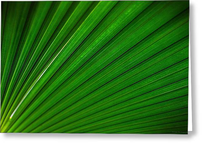 Eventail Greeting Cards - A wing of palms Greeting Card by Philippe Meisburger
